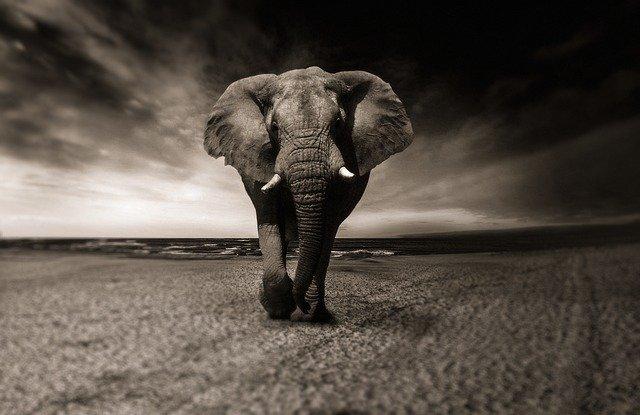 ทำนายฝัน ฝันเห็น ช้างฝันว่าได้ขี่ช้าง เลขเด้ด